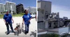 Therapy Dogs Bring Comfort Amid Miami Building Collapse