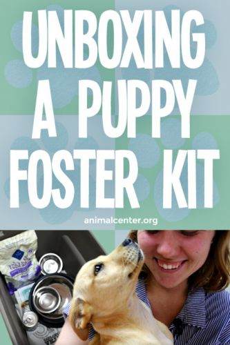 Unboxing a Puppy Foster Starter Kit