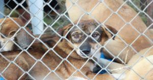 New Colorado Bill Would Ban Puppy Mills, Retail Sale Pets