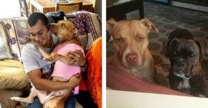 Family Refused To Give Up On Their Missing Pups, Even After A Month-Long Search