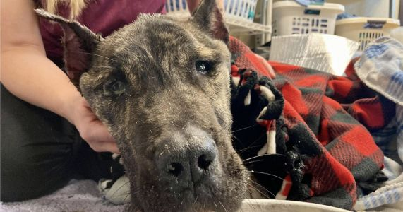 Dog Neglected In Cage For Weeks Now Fights For His Life