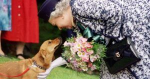 Queen Elizabeth Surprised With New Corgi Shortly After Puppy's Death