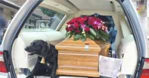 Heartbroken Dog Refuses To Leave Her Human's Casket After His Funeral