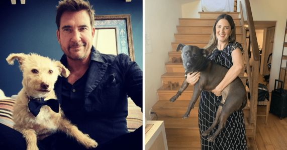 """Celebrity Dogs Steal The Spotlight At The 2020 """"Pandemmys"""""""