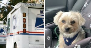 Rescue Dog Saves The Life Of His Favorite Mailman