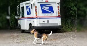 USPS Paw Print Mailbox Stickers Identify Homes With Aggressive Dogs