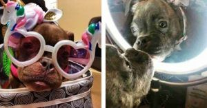 Puppy With Special Needs Captures Everyone's Heart