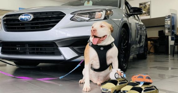 Subaru Finds Homes For Thousands Of Hard-To-Adopt Dogs