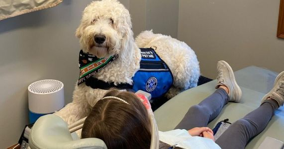 Bob The Comfort Dog Calms Anxious Patients At The Dentist's Office