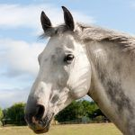 Good news and bad news about senior horse care