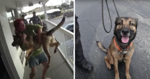 Dog Miraculously Lands On Feet After Woman Throws Her Off Balcony