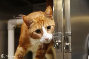 Alley Cat Allies Protects Cats as Wildfires Burn