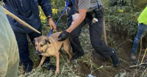 Firefighters Save Terrified Dog Trapped In Narrow Drain Pipe