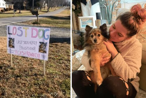 Rescue Pomeranian That Went Missing On Cross-Country Visit Reunited With Mom