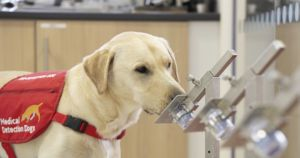 Airport Dogs Could Soon Sniff Travelers For COVID-19