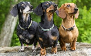 The 10 Longest Living Dog Breeds To Share Your Love With