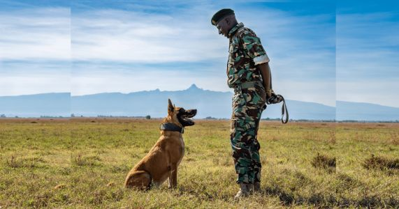 Hero Dog Dies After Dedicating His Life To Saving Endangered Rhinos