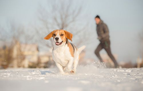 Winter Safety and Exercise for Pets