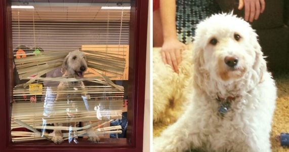 Dog Follows His Mini-Humans To School & Ends Up In Detention