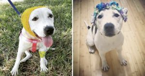 Former Bait Dog Becomes The Newest Disney Princess