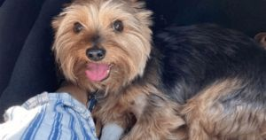 Small Senior Dog Takes On Rattlesnake To Defend His Humans, And Wins