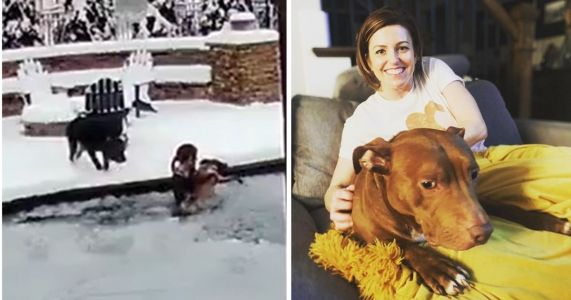 Video Captures Heroic Dog Mom Rescuing Pit Bull From Frozen Pool