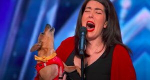 """Adorable Singing Chihuahua Gets Standing Ovation From """"America's Got Talent"""" Judges"""