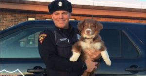 Australian Shepherd Who Went Missing After Rollover Crash Has Been Found