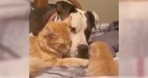 Witness The Moment This Mama Cat Introduces Her Kitten To Her Dog BFF