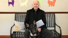 Major The Dog Came From An Animal Shelter. Now He's Headed To The White House