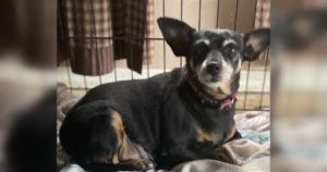 You Helped A Senior Chihuahua Reach Her Weight Loss Goals