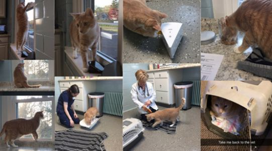 Our Cat Friendly area is open!