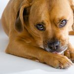 Tetanus rare in dogs, but clean wounds