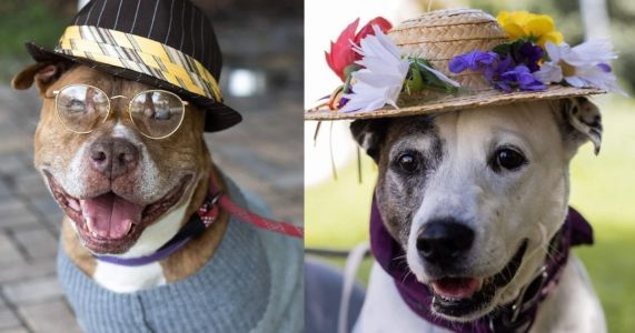 This Adorable Photoshoot Of Gramps And Granny Dogs Will Make You Giggle