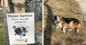 Attention Loving Dog Has Her Own Sanitizing Station For Would-Be Petters