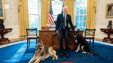 From White House To Dog House