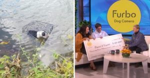 UPDATE: Couple Who Saved Dog From Icy Lake Enjoy A Day Of Surprises On 'Ellen'
