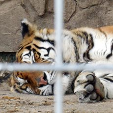 Animal Legal Defense Fund Sues Animaland Zoological Park Over Endangered Species Act Violations