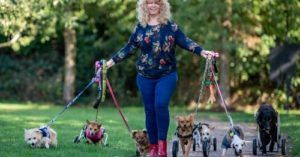 Dedicated Dog Rescuer Turns Her Home Into A Handicapped-Pup Sanctuary