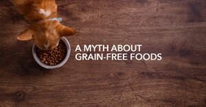 """Surprisingly, """"Grain-Free"""" foods contain 50% carbs! Learn how to boost your dog's protein inexpensively"""