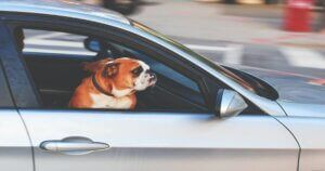 Dog Locked in Hot Car Reignites RSPCA Campaign to Raise Awareness