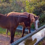 The Time to Vaccinate Horses for EEE Is Now