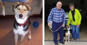 You Helped Rico Address His Stubborn Behavior & Find A Forever Home