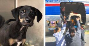 You Can Help Fly Snickers To The Forever Family Of His Dreams!