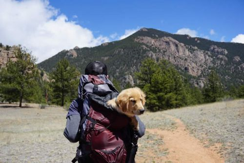 Pet Friendly National Parks in the United States