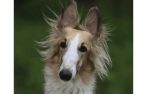 The 10 Fastest Dog Breeds On Earth
