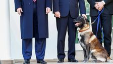 Trump Finally Meets Conan, The Hero Dog That Helped Take Down ISIS Leader