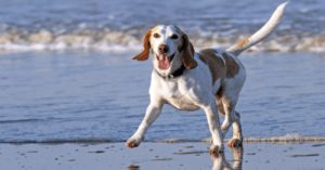 Here Is An Easy, Affordable Way To Make Kibble Healthier!