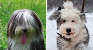 Can You Tell The Difference Between These Dog Breeds?