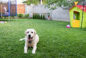 9 Surprising Backyard Dangers That Could Harm Your Dog